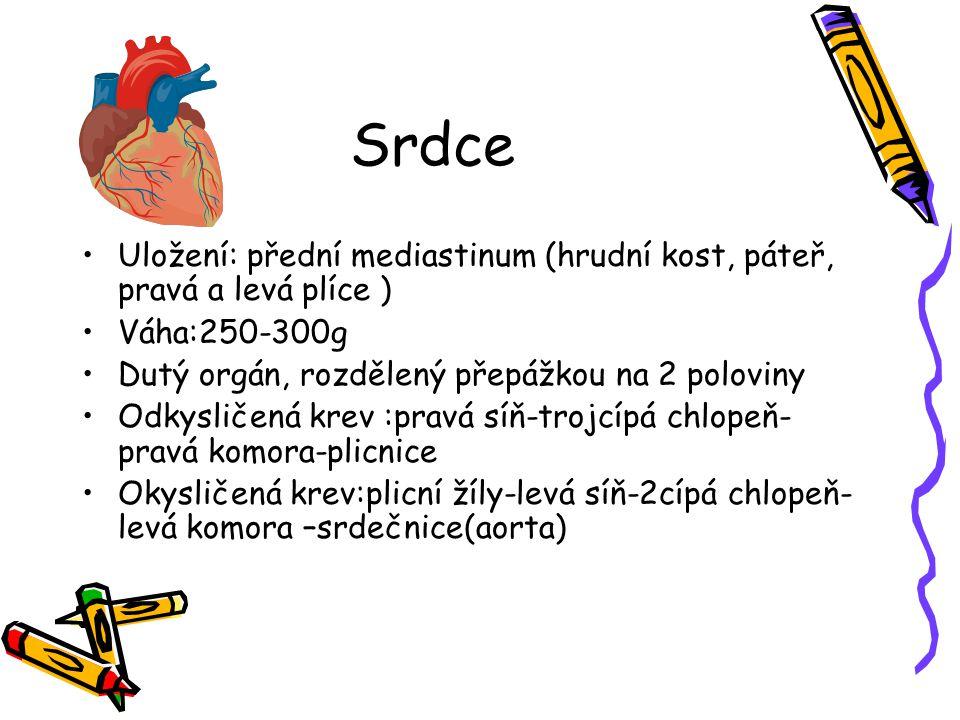Srdce Uložení: přední mediastinum (hrudní kost, páteř, pravá a levá plíce ) Váha:250-300g Dutý orgán, rozdělený přepážkou na 2 poloviny Odkysličená kr