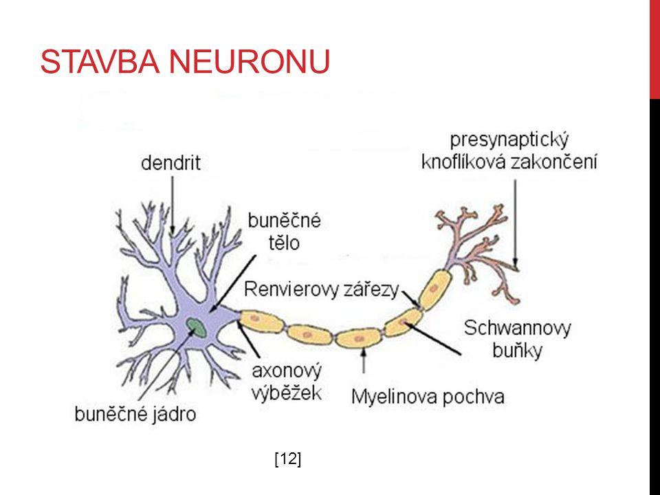 STAVBA NEURONU [12]