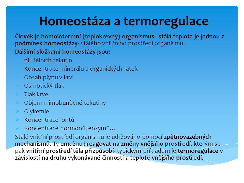 Homeostáza a termoregulace Člověk je homoiotermní (teplokrevný) organismus- stálá teplota je jednou z podmínek homeostázy- stálého vnitřního prostředí organismu.