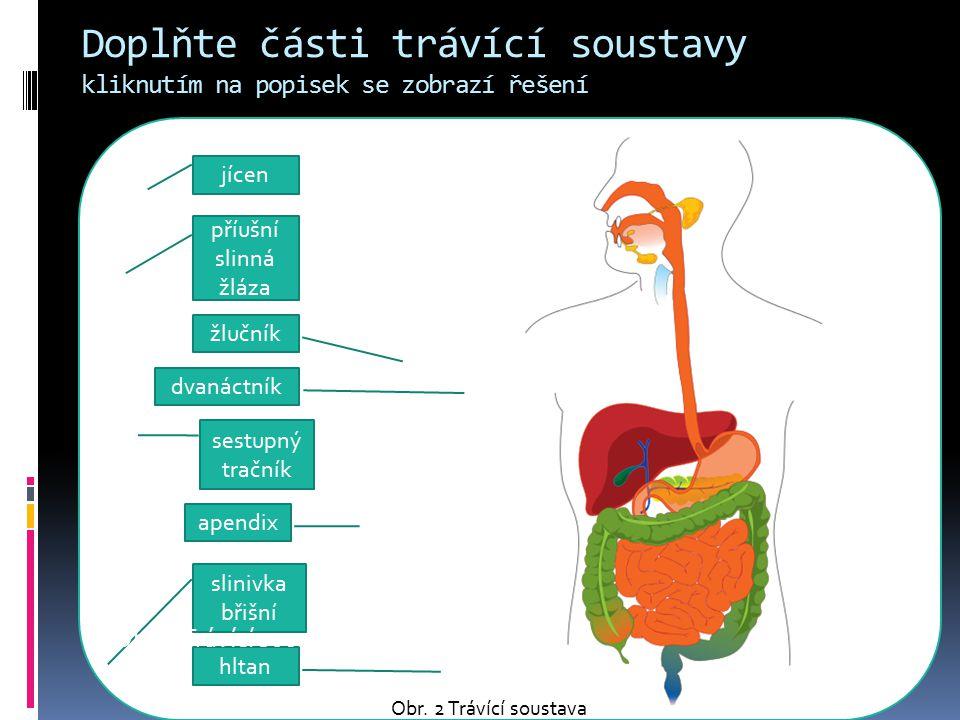 Doplňte části trávící soustavy kliknutím na popisek se zobrazí řešení jícen příušní slinná žláza žlučník dvanáctník sestupný tračník apendix slinivka