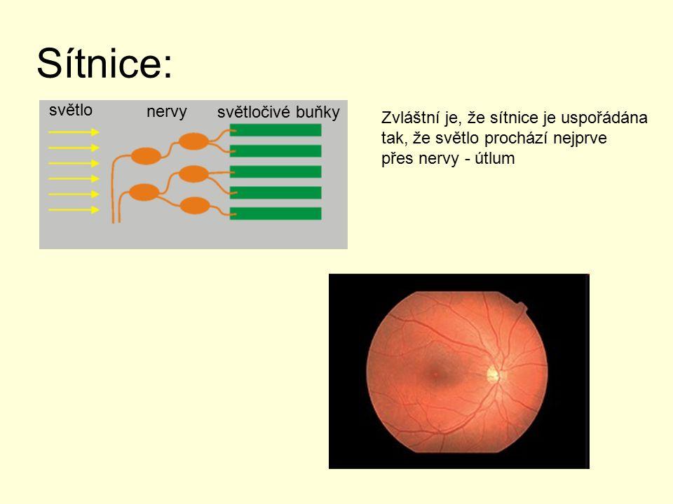 Sítnice: světlo nervy světločivé buňky Zvláštní je, že sítnice je uspořádána tak, že světlo prochází nejprve přes nervy - útlum