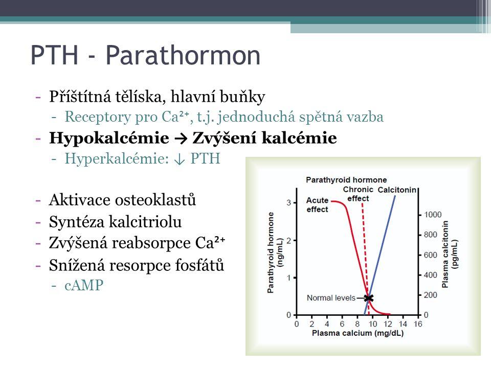 PTH - Parathormon -Příštítná tělíska, hlavní buňky -Receptory pro Ca ²⁺, t.j. jednoduchá spětná vazba -Hypokalcémie → Zvýšení kalcémie -Hyperkalcémie: