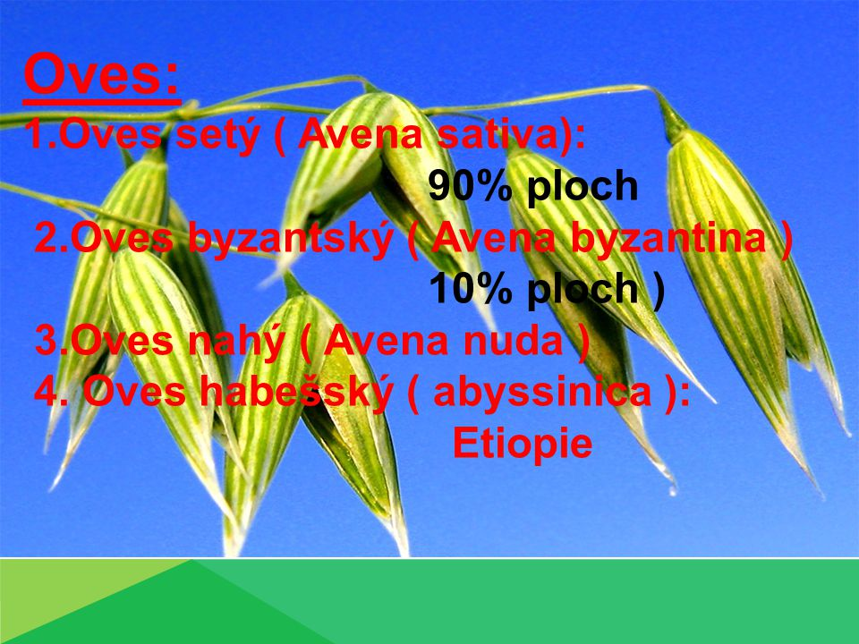 Oves: 1.Oves setý ( Avena sativa): 90% ploch 2.Oves byzantský ( Avena byzantina ) 10% ploch ) 3.Oves nahý ( Avena nuda ) 4.