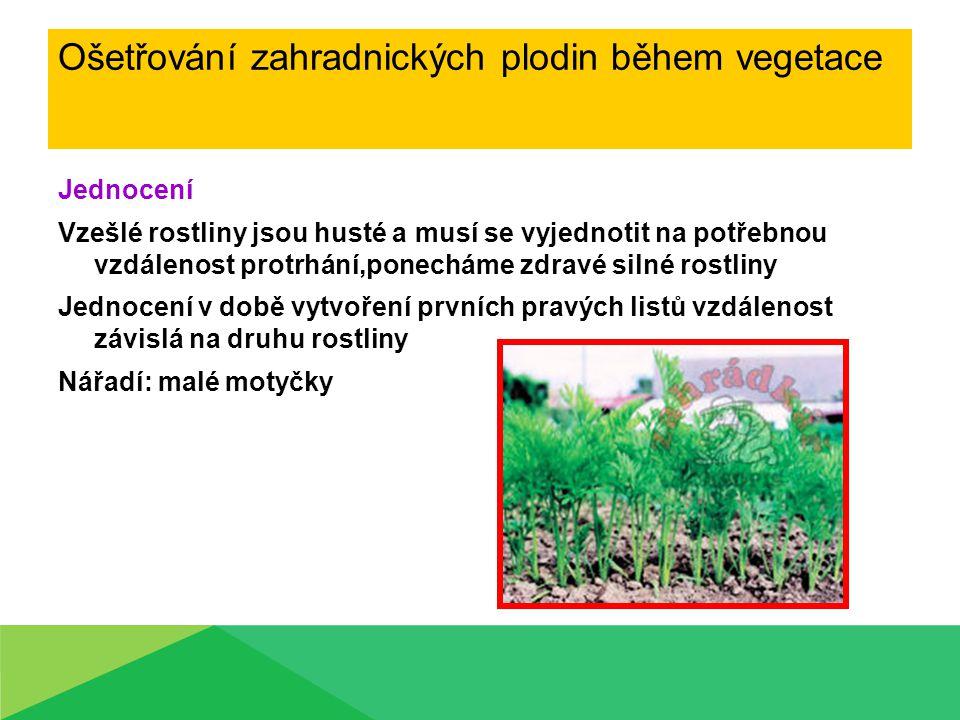 Jednocení Vzešlé rostliny jsou husté a musí se vyjednotit na potřebnou vzdálenost protrhání,ponecháme zdravé silné rostliny Jednocení v době vytvoření