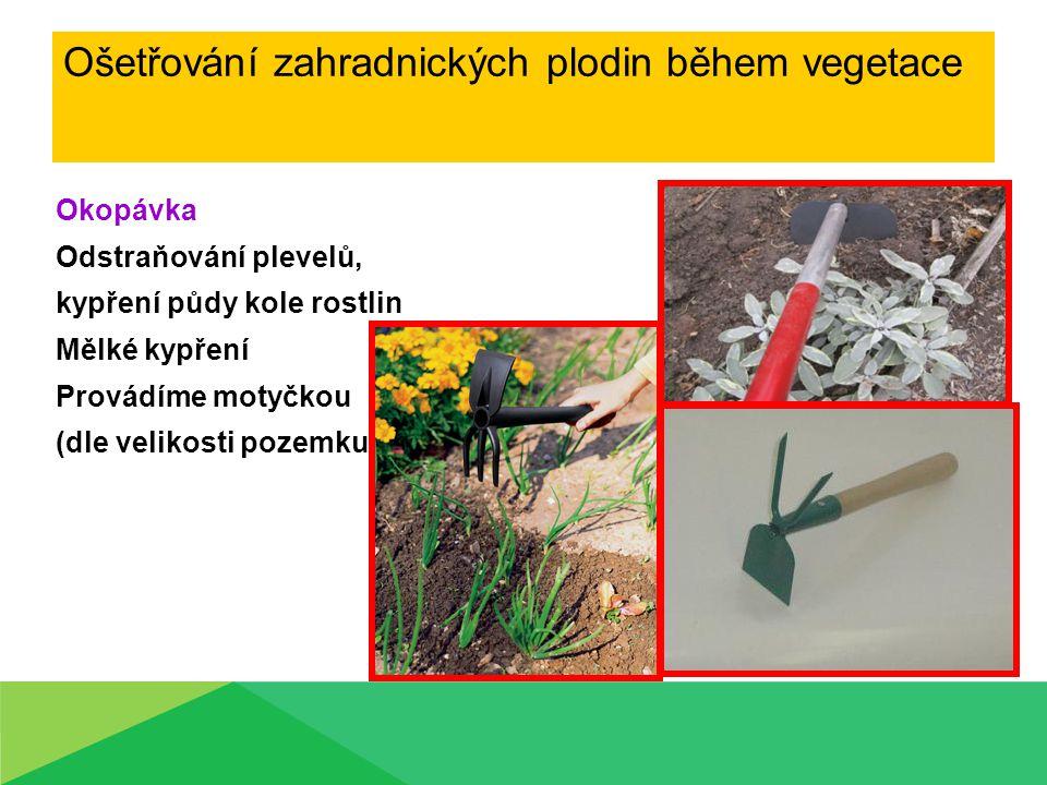 Okopávka Odstraňování plevelů, kypření půdy kole rostlin Mělké kypření Provádíme motyčkou (dle velikosti pozemku)