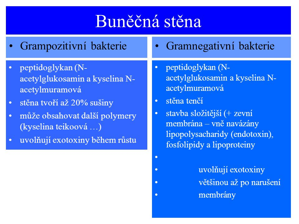 Buněčná stěna Grampozitivní bakterieGramnegativní bakterie peptidoglykan (N- acetylglukosamin a kyselina N- acetylmuramová stěna tvoří až 20% sušiny m