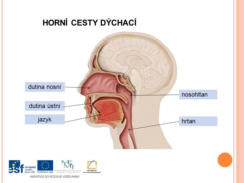 HORNÍ CESTY DÝCHACÍ dutina nosní dutina ústní jazyk nosohltan hrtan