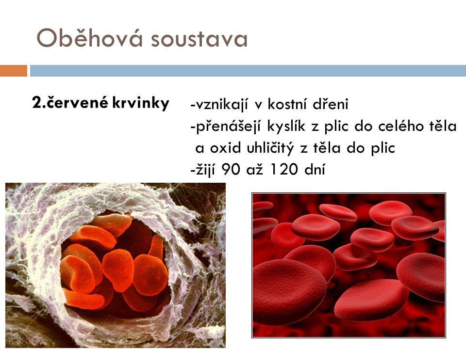 Oběhová soustava 2.červené krvinky -vznikají v kostní dřeni -přenášejí kyslík z plic do celého těla a oxid uhličitý z těla do plic -žijí 90 až 120 dní
