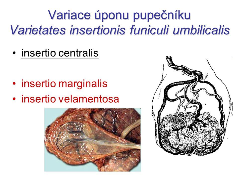 Variace úponu pupečníku Varietates insertionis funiculi umbilicalis insertio centralis insertio marginalis insertio velamentosa