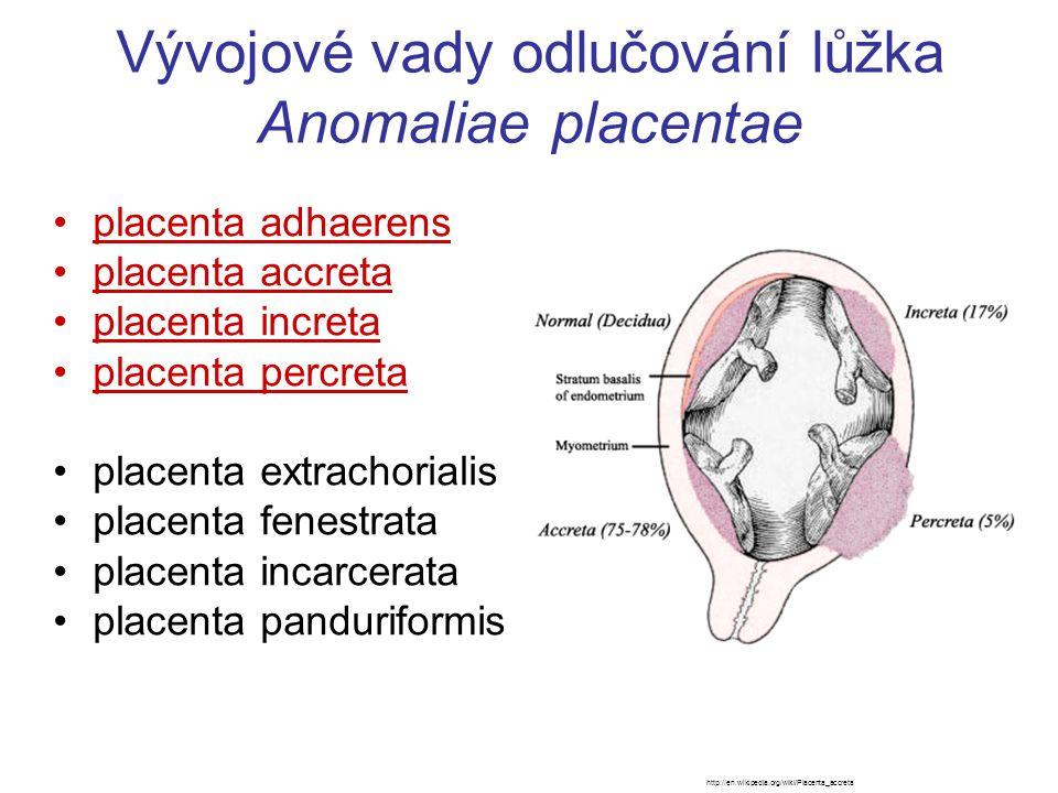 Vývojové vady odlučování lůžka Anomaliae placentae placenta adhaerens placenta accreta placenta increta placenta percreta placenta extrachorialis plac