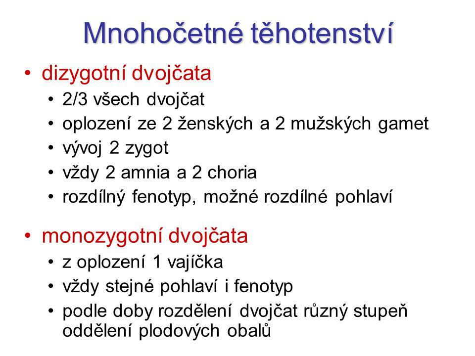 Mnohočetné těhotenství dizygotní dvojčata 2/3 všech dvojčat oplození ze 2 ženských a 2 mužských gamet vývoj 2 zygot vždy 2 amnia a 2 choria rozdílný f