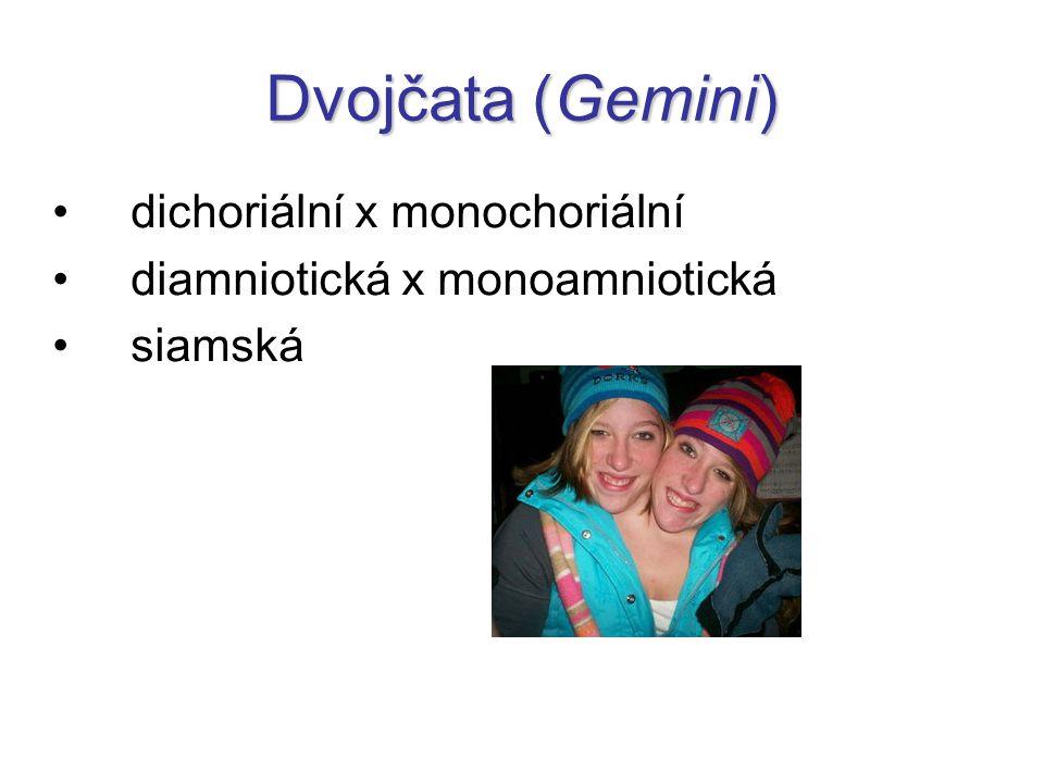 Dvojčata (Gemini) dichoriální x monochoriální diamniotická x monoamniotická siamská