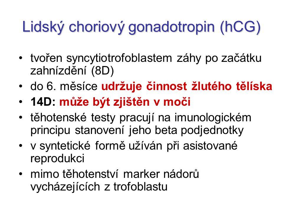 Lidský choriový gonadotropin (hCG) tvořen syncytiotrofoblastem záhy po začátku zahnízdění (8D) do 6. měsíce udržuje činnost žlutého tělíska 14D: může