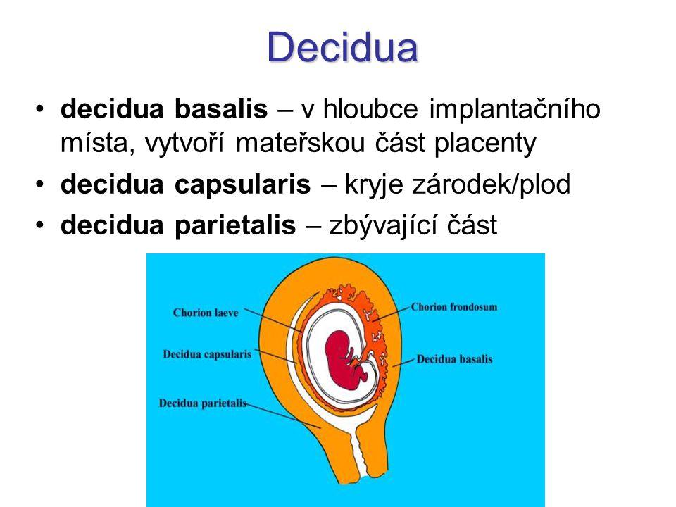 Decidua decidua basalis – v hloubce implantačního místa, vytvoří mateřskou část placenty decidua capsularis – kryje zárodek/plod decidua parietalis –