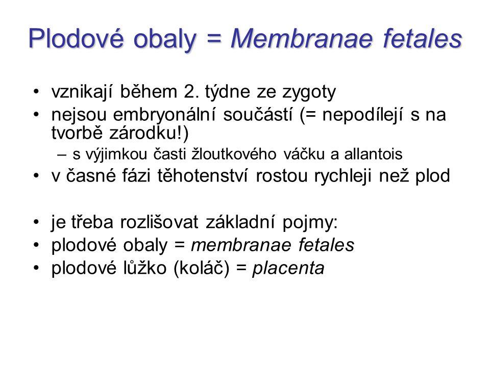 Plodové obaly = Membranae fetales vznikají během 2. týdne ze zygoty nejsou embryonální součástí (= nepodílejí s na tvorbě zárodku!) –s výjimkou časti