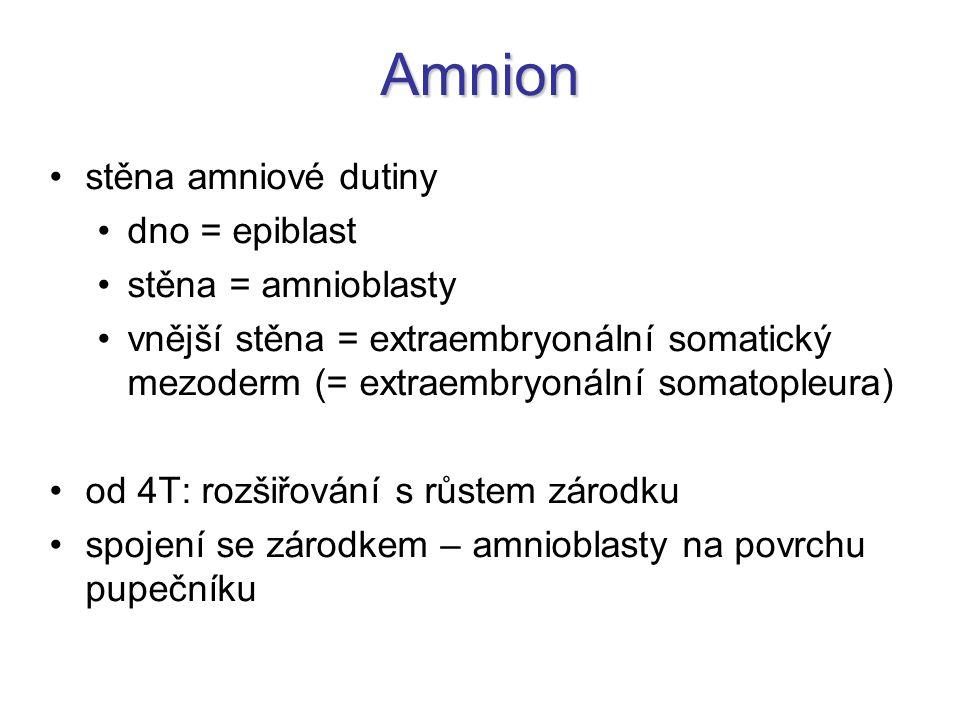 Amnion stěna amniové dutiny dno = epiblast stěna = amnioblasty vnější stěna = extraembryonální somatický mezoderm (= extraembryonální somatopleura) od