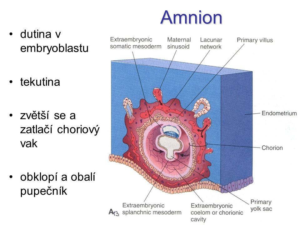 Amnion dutina v embryoblastu tekutina zvětší se a zatlačí choriový vak obklopí a obalí pupečník