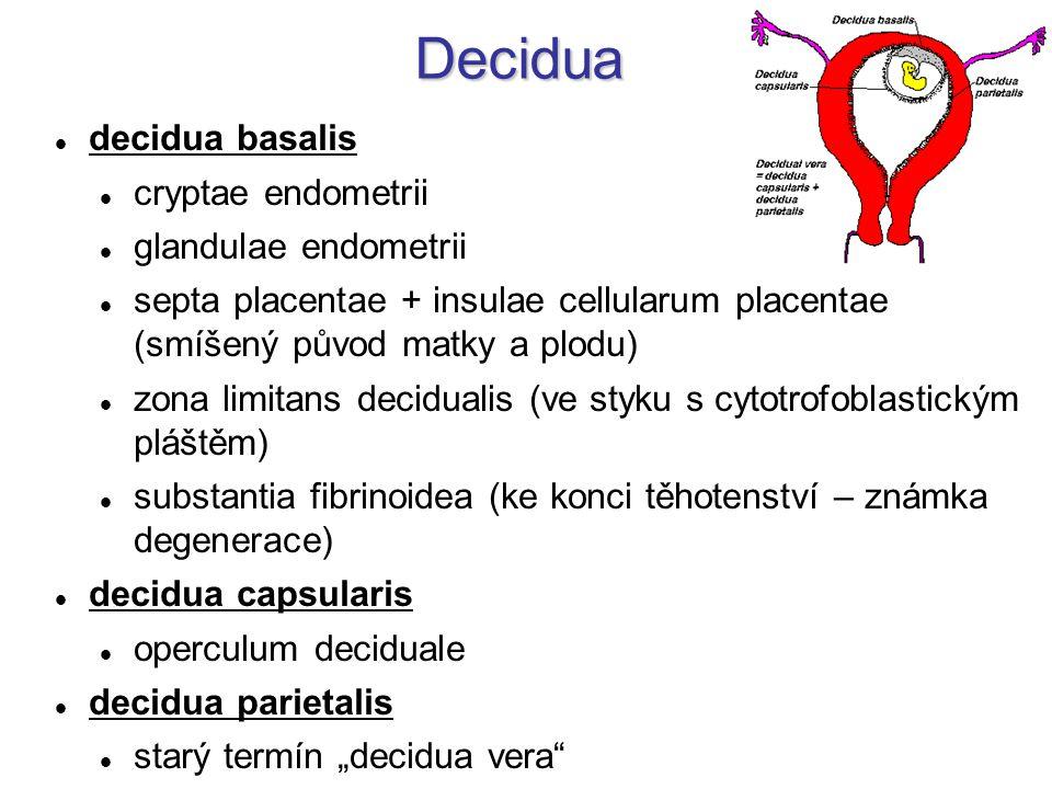 Decidua decidua basalis cryptae endometrii glandulae endometrii septa placentae + insulae cellularum placentae (smíšený původ matky a plodu) zona limi