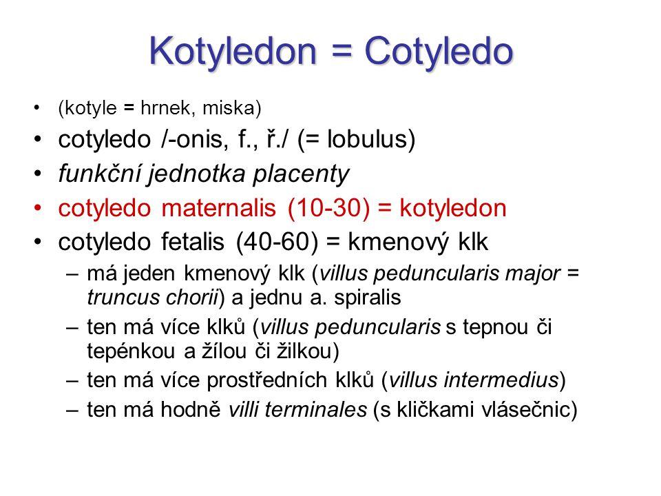 Kotyledon = Cotyledo (kotyle = hrnek, miska) cotyledo /-onis, f., ř./ (= lobulus) funkční jednotka placenty cotyledo maternalis (10-30) = kotyledon co