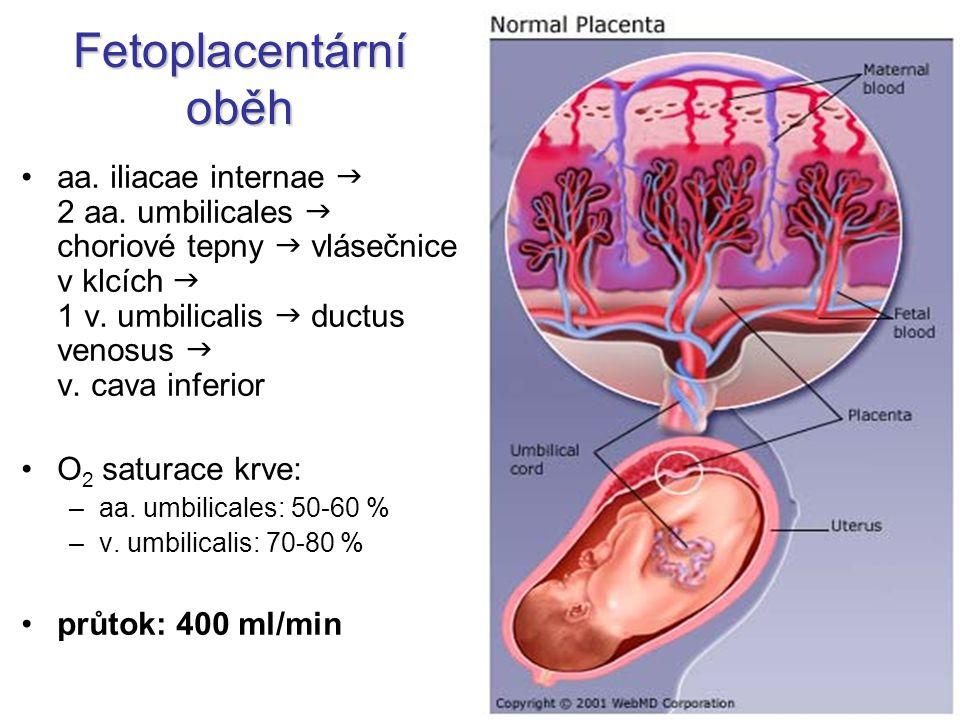 Fetoplacentární oběh aa. iliacae internae  2 aa. umbilicales  choriové tepny  vlásečnice v klcích  1 v. umbilicalis  ductus venosus  v. cava inf