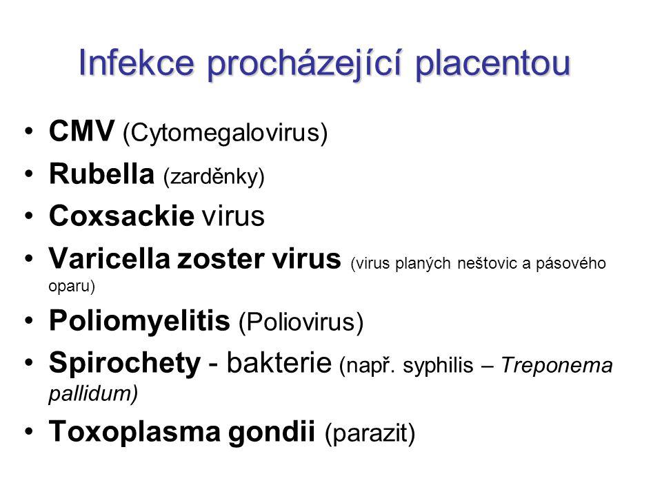 Infekce procházející placentou CMV (Cytomegalovirus) Rubella (zarděnky) Coxsackie virus Varicella zoster virus (virus planých neštovic a pásového opar