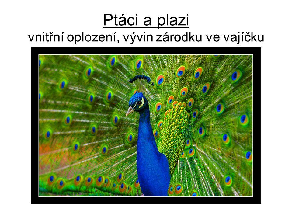 Ptáci a plazi vnitřní oplození, vývin zárodku ve vajíčku