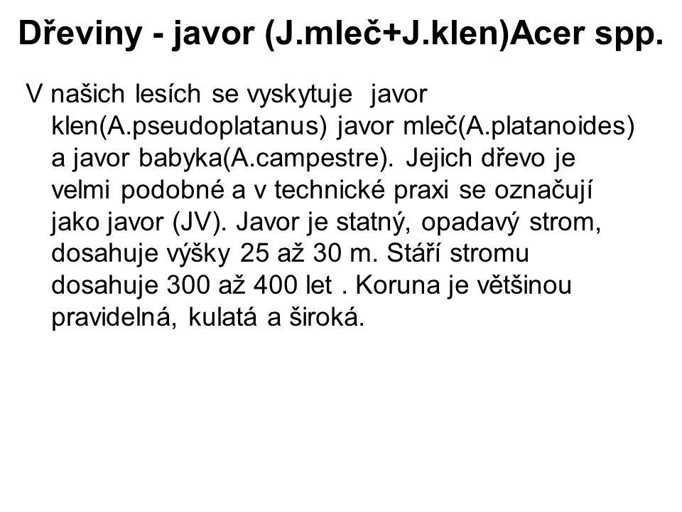 Dřeviny - javor (J.mleč+J.klen)Acer spp. V našich lesích se vyskytuje javor klen(A.pseudoplatanus) javor mleč(A.platanoides) a javor babyka(A.campestr