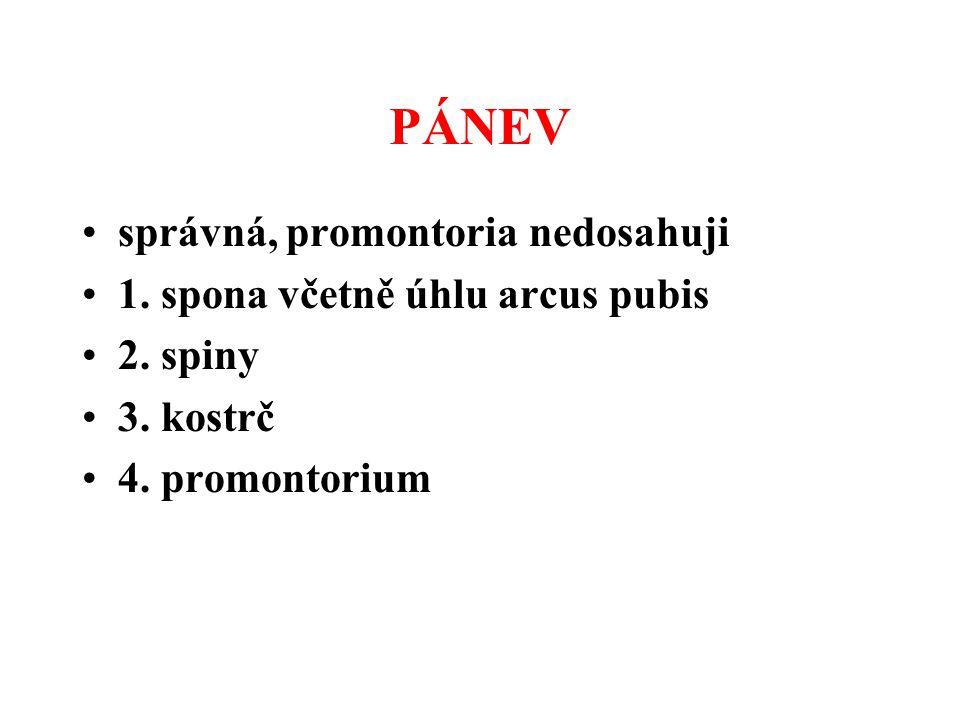 PÁNEV správná, promontoria nedosahuji 1. spona včetně úhlu arcus pubis 2. spiny 3. kostrč 4. promontorium