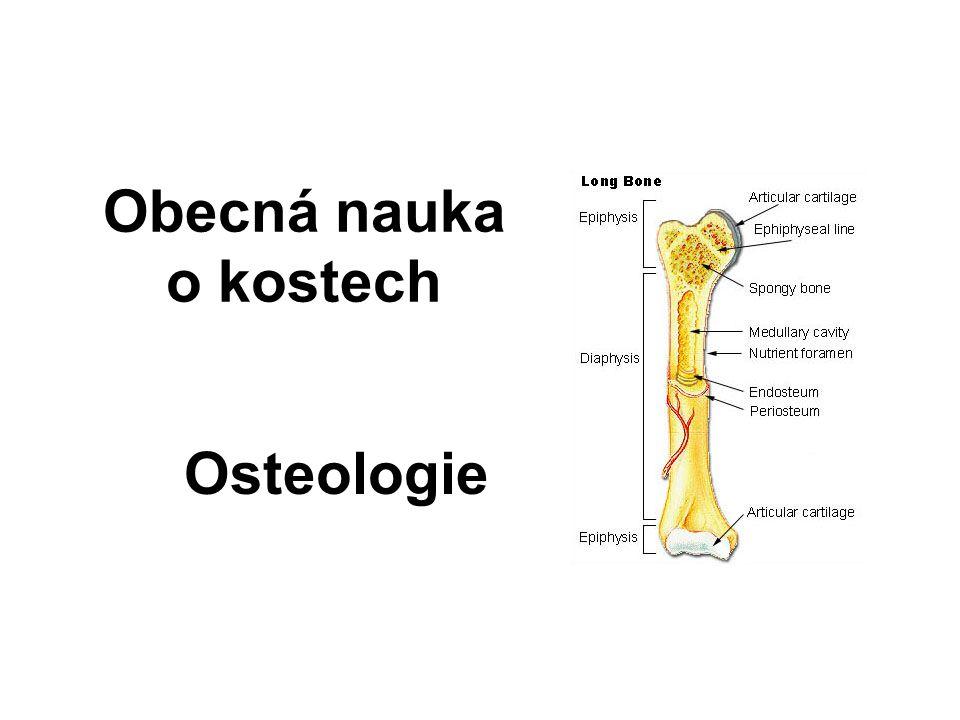 Rozdělení kostí Dlouhé kosti – ossa longa Krátké kosti – ossa brevia Ploché kosti – ossa plana Pneumatické – ossa pneumatika Sezamské kosti – ossa sesamoidea Nepravidelné kosti – ossa irregularia