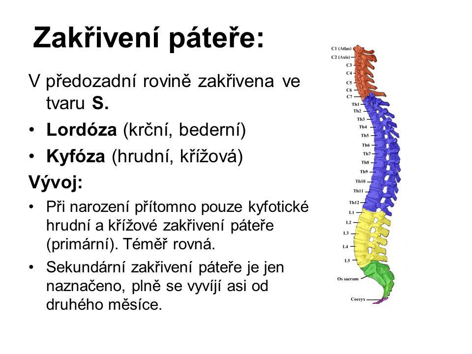 Zakřivení páteře: V předozadní rovině zakřivena ve tvaru S. Lordóza (krční, bederní) Kyfóza (hrudní, křížová) Vývoj: Při narození přítomno pouze kyfot