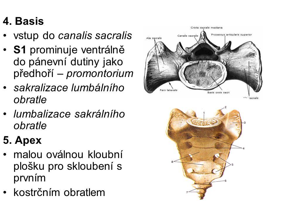 4. Basis vstup do canalis sacralis S1 prominuje ventrálně do pánevní dutiny jako předhoří – promontorium sakralizace lumbálního obratle lumbalizace sa