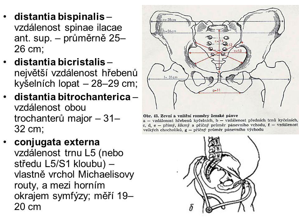 distantia bispinalis – vzdálenost spinae ilacae ant. sup. – průměrně 25– 26 cm; distantia bicristalis – největší vzdálenost hřebenů kyšelních lopat –