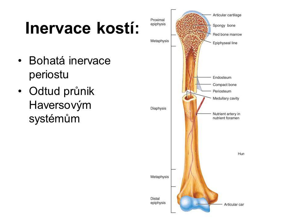 Osifikace (kostnatění) a růst kostí: Embryonálně vzniká skelet z mesenchymu činností osteoblastů.