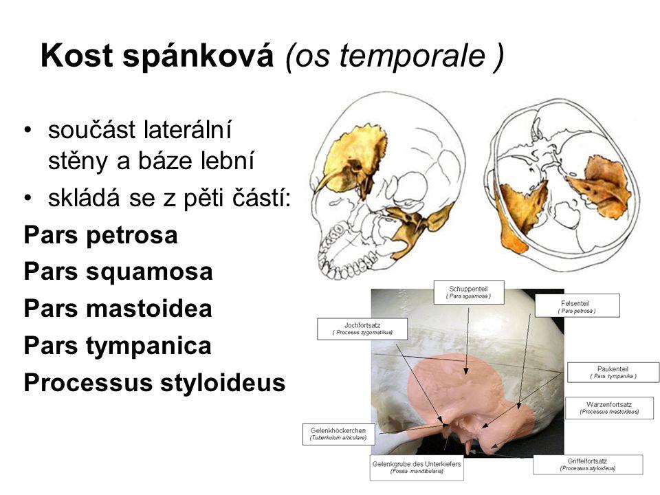 Kost spánková (os temporale ) součást laterální stěny a báze lební skládá se z pěti částí: Pars petrosa Pars squamosa Pars mastoidea Pars tympanica Pr