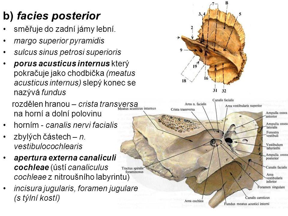 b) facies posterior směřuje do zadní jámy lební. margo superior pyramidis sulcus sinus petrosi superioris porus acusticus internus který pokračuje jak