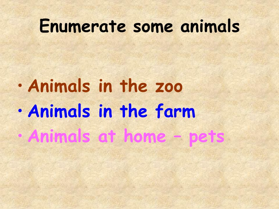 Animals in to zoo