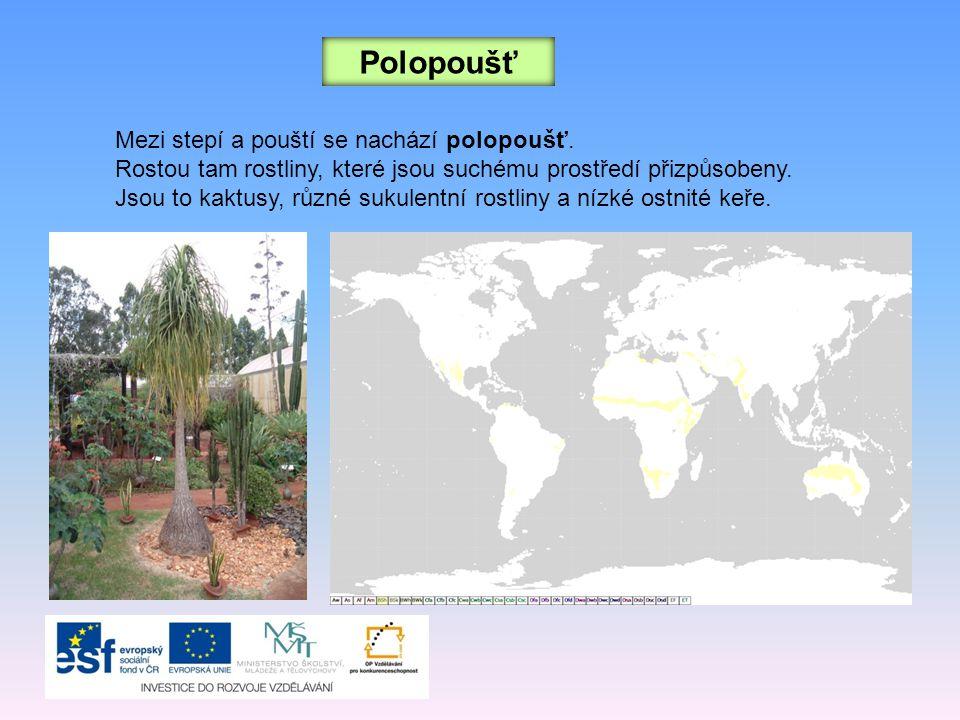 Polopoušť Mezi stepí a pouští se nachází polopoušť. Rostou tam rostliny, které jsou suchému prostředí přizpůsobeny. Jsou to kaktusy, různé sukulentní