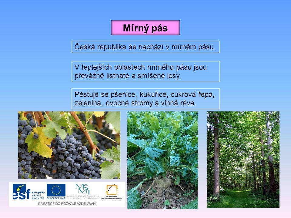 Mírný pás Česká republika se nachází v mírném pásu. V teplejších oblastech mírného pásu jsou převážně listnaté a smíšené lesy. Pěstuje se pšenice, kuk