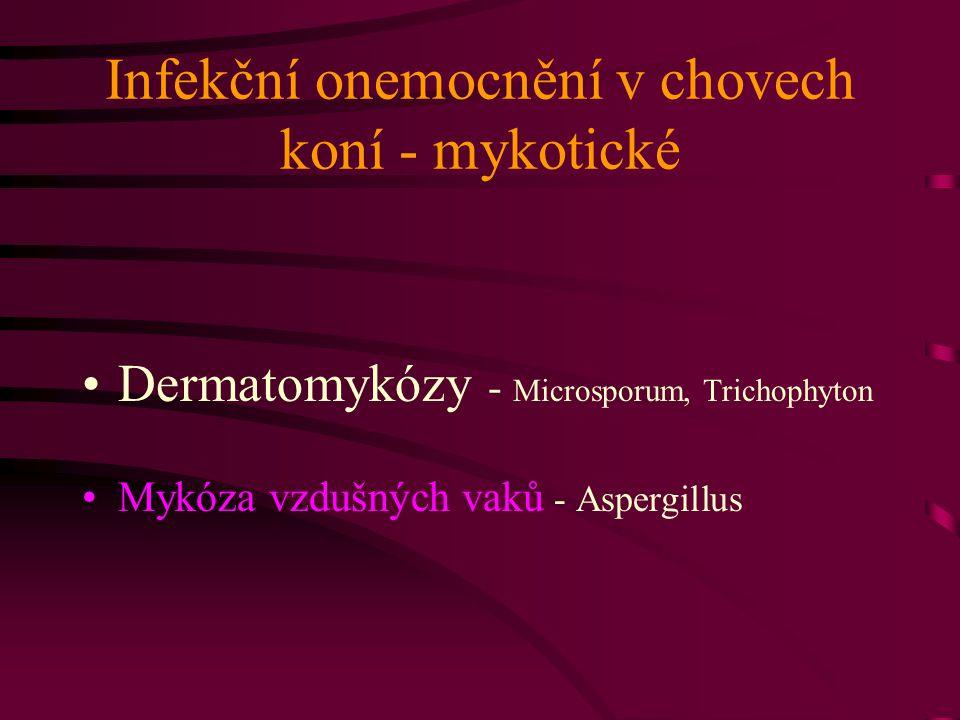 Infekční onemocnění v chovech koní - mykotické Dermatomykózy - Microsporum, Trichophyton Mykóza vzdušných vaků - Aspergillus