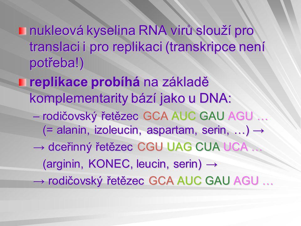 nukleová kyselina RNA virů slouží pro translaci i pro replikaci (transkripce není potřeba!) replikace probíhá na základě komplementarity bází jako u DNA: –rodičovský řetězec GCA AUC GAU AGU … (= alanin, izoleucin, aspartam, serin, …) → → dceřinný řetězec CGU UAG CUA UCA … (arginin, KONEC, leucin, serin) → → rodičovský řetězec GCA AUC GAU AGU …