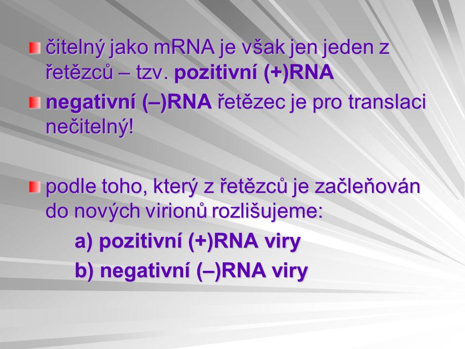 čitelný jako mRNA je však jen jeden z řetězců – tzv.