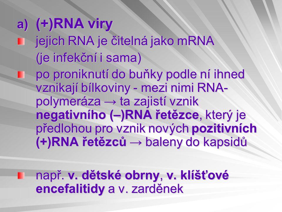 a) (+)RNA viry jejich RNA je čitelná jako mRNA (je infekční i sama) po proniknutí do buňky podle ní ihned vznikají bílkoviny - mezi nimi RNA- polymeráza → ta zajistí vznik negativního (–)RNA řetězce, který je předlohou pro vznik nových pozitivních (+)RNA řetězců → baleny do kapsidů např.
