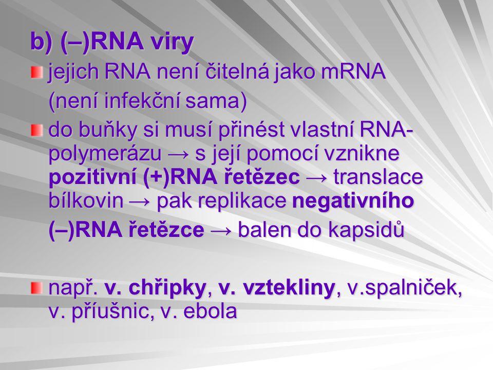 b) (–)RNA viry jejich RNA není čitelná jako mRNA (není infekční sama) do buňky si musí přinést vlastní RNA- polymerázu → s její pomocí vznikne pozitivní (+)RNA řetězec → translace bílkovin → pak replikace negativního (–)RNA řetězce → balen do kapsidů např.