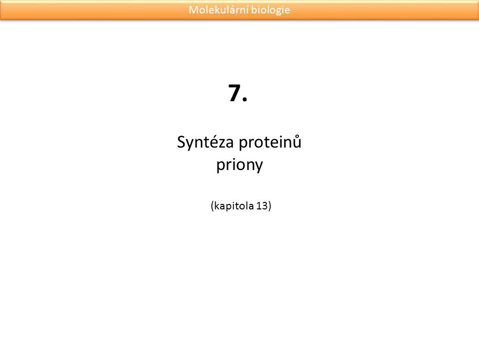 Syntéza proteinů priony. 7. Molekulární biologie (kapitola 13)