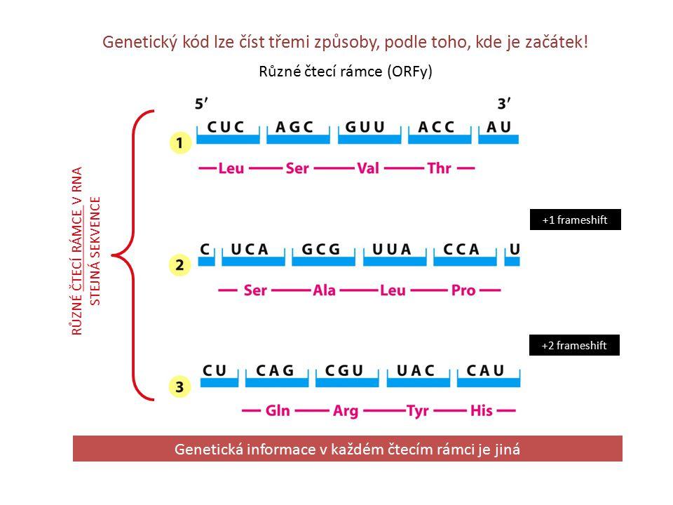 Genetický kód lze číst třemi způsoby, podle toho, kde je začátek.