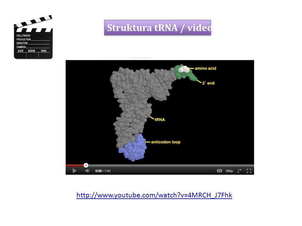 Terminace stop kodon na mRNA: UAA, UAG, UGA neexistuje žádná tRNA, ale jsou rozpoznávány uvolňovacími faktory (RF1 nebo RF2, release factors) peptid je odštěpen peptidyltransferázovou aktivitou ribozomu, tRNA se posune do E místa a odpadne RRF (ribosome recycling factor) uvolní velkou podjednotku uvolnění malé podjednotky a mRNA PROKARYOTA