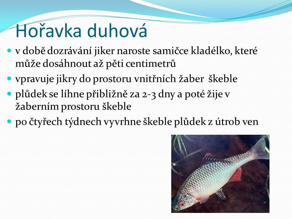 Použité zdroje:  Mlži (Bivalvia).Dům dětí a mládeže Orlová [online].
