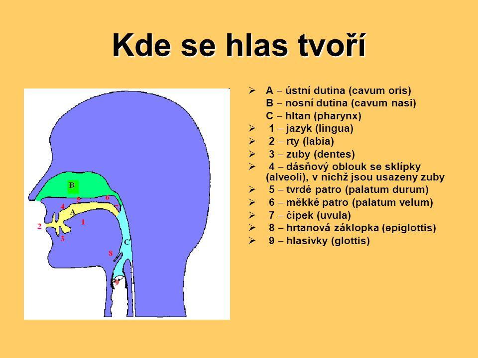 Kde se hlas tvoří  A ‒ ústní dutina (cavum oris) B ‒ nosní dutina (cavum nasi) C ‒ hltan (pharynx)  1 ‒ jazyk (lingua)  2 ‒ rty (labia)  3 ‒ zuby (dentes)  4 ‒ dásňový oblouk se sklípky (alveoli), v nichž jsou usazeny zuby  5 ‒ tvrdé patro (palatum durum)  6 ‒ měkké patro (palatum velum)  7 ‒ čípek (uvula)  8 ‒ hrtanová záklopka (epiglottis)  9 ‒ hlasivky (glottis)