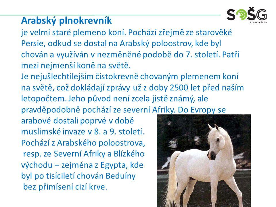 Arabský plnokrevník je velmi staré plemeno koní. Pochází zřejmě ze starověké Persie, odkud se dostal na Arabský poloostrov, kde byl chován a využíván