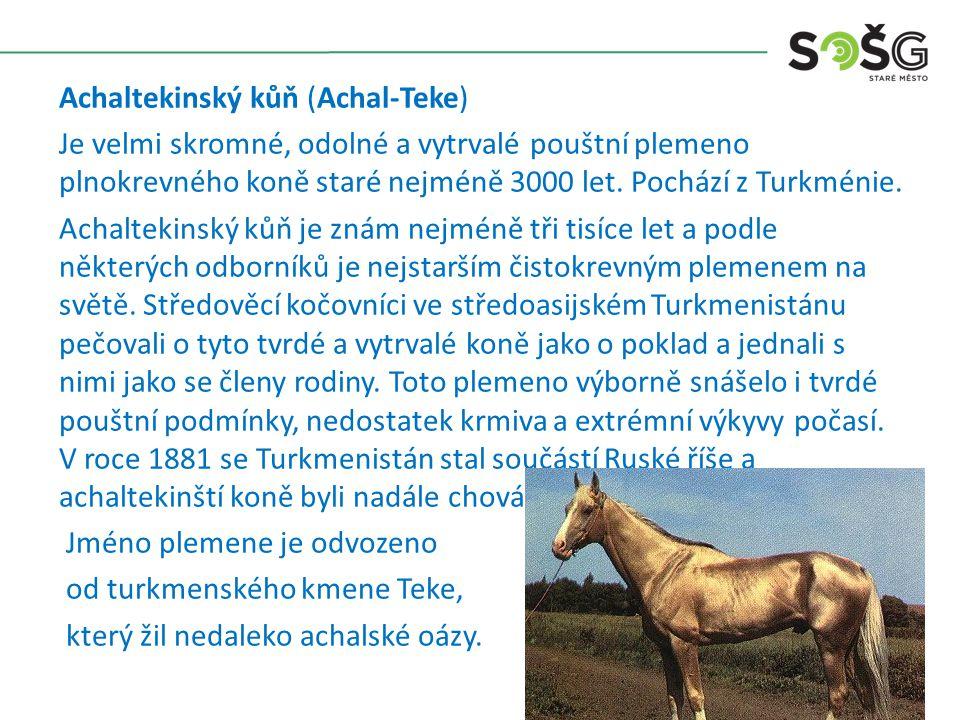 Achaltekinský kůň (Achal-Teke) Je velmi skromné, odolné a vytrvalé pouštní plemeno plnokrevného koně staré nejméně 3000 let.